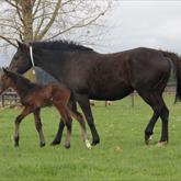 1 day old Ocean Park/ Code Black (O'Reilly) C