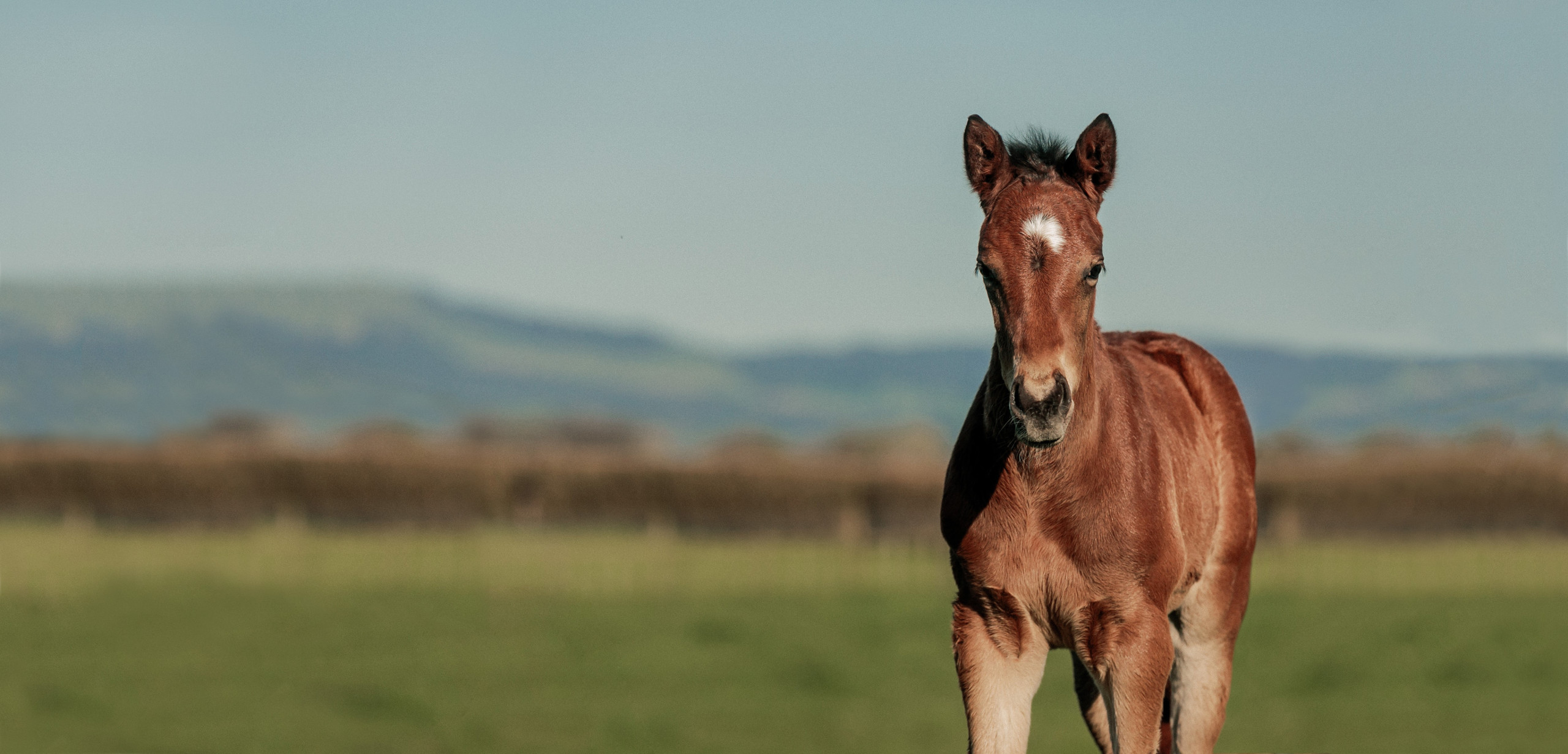Tivaci Foal Photo Competition
