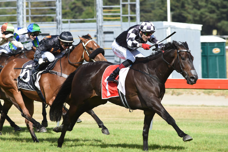 Champion Galloper Kawi is a 7-time Group 1 Winner