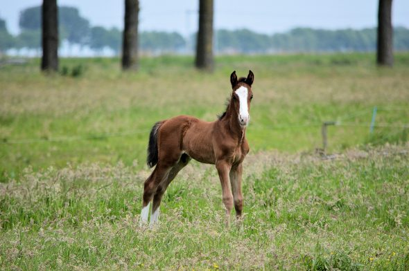 An example foal entry