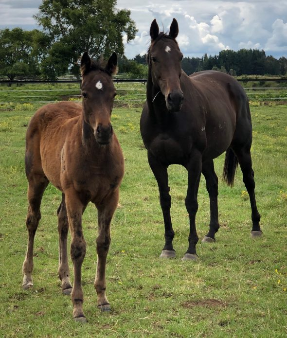 Tivaci filly from  Monachee, born September 1, 2018. Bred by PV & PG Mullin Trust.