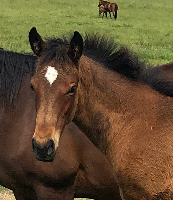Tivaci - Savanah Rush filly, born September 5, 2018. Bred by Jen Campin.