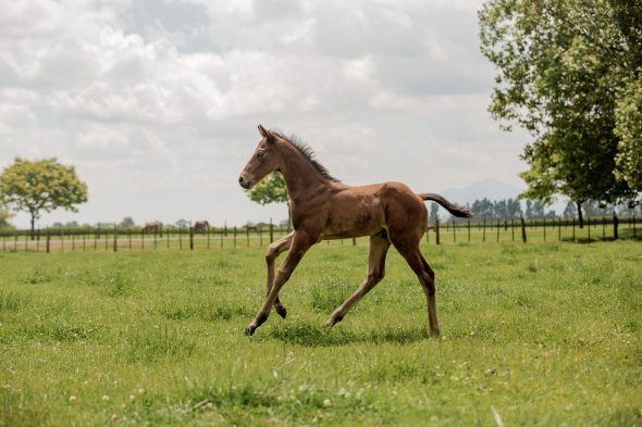 Tivaci – Soul Sista colt, born October 23, 2018. Bred by Rupert & Cheryl Legh, Bryan & Christine Dorman and Michael Ramsden.