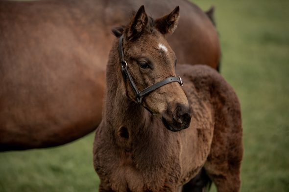 Tivaci – Tiff And Co colt, born August 9, 2018. Bred by The Dowager Duchess of Bedford.