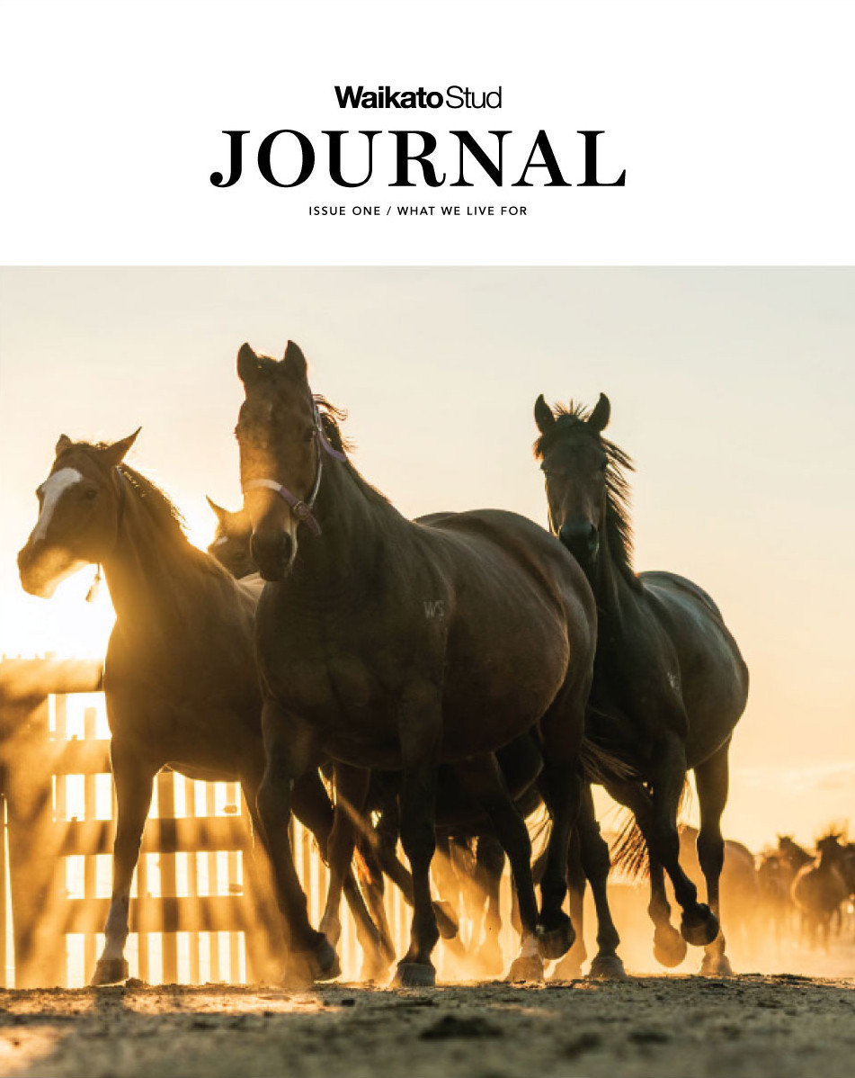 The Waikato Stud Journal, Issue One