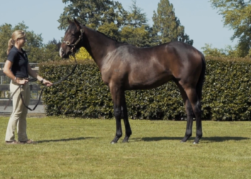 Witsabouthim (Savabeel x Miracle Miss)
